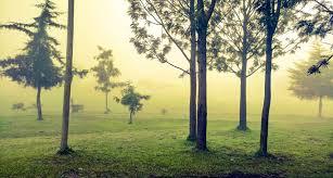 Le Rwanda, ce «pilier de l'écologie en Afrique»