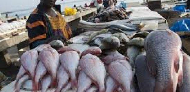Maladie 'mystérieuse» : Psychose à Mbour, les clients désertent les vendeurs de poissons