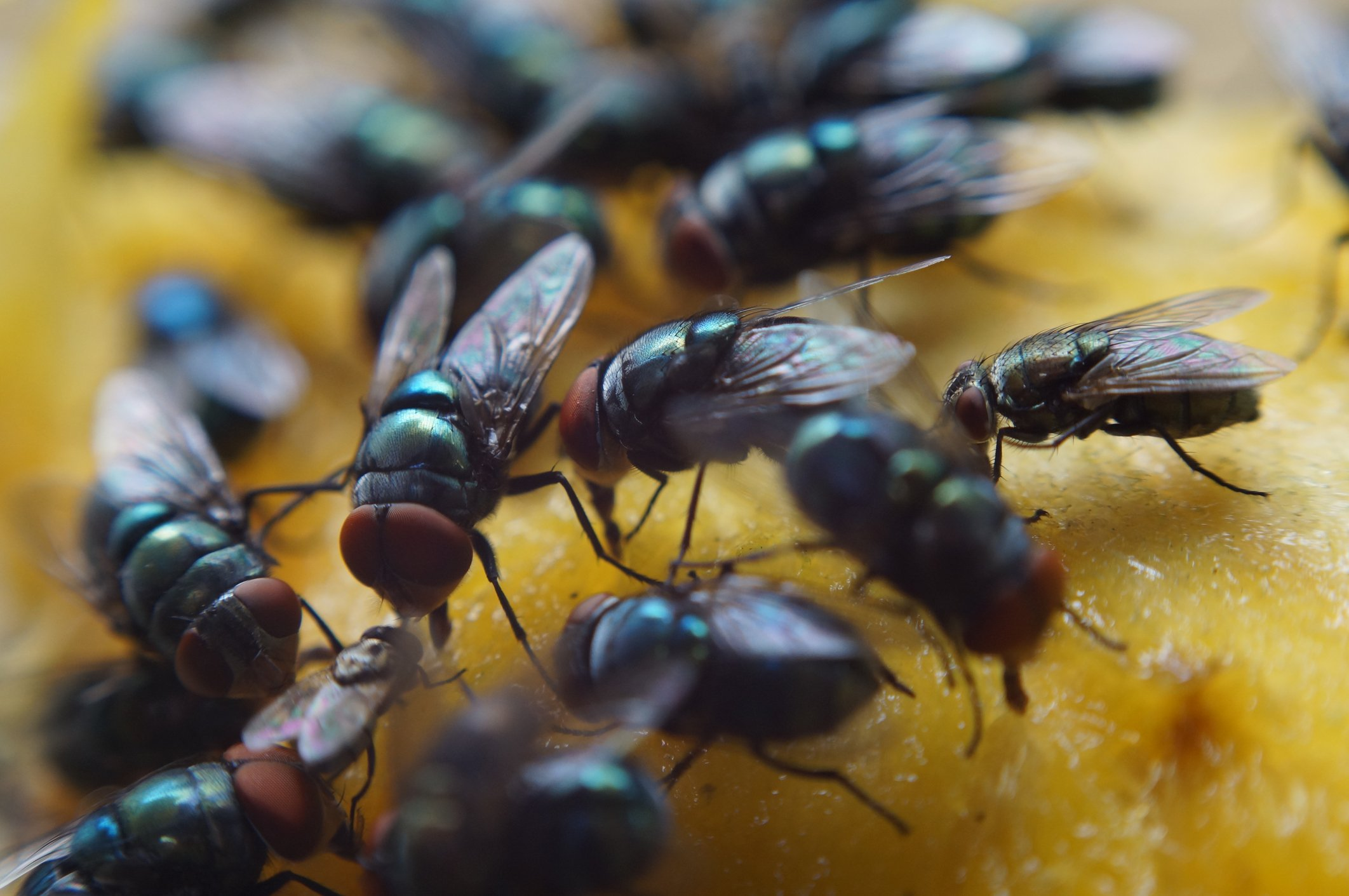 La vérité sur l'hélico qui déverse des mouches à Allou-kagne