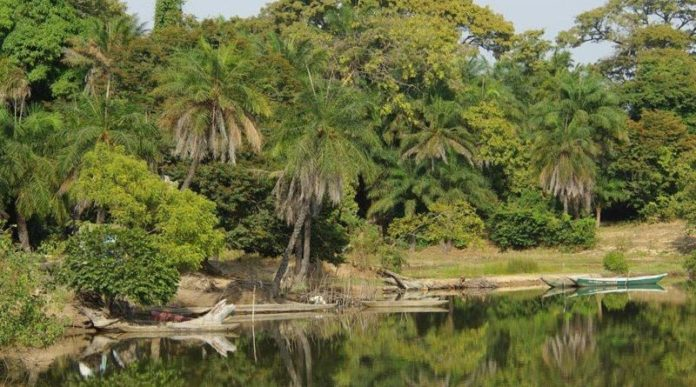 La forêt casamançaise : Zone à risque et sous le contrôle de bandes armées