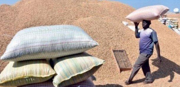 L'arachide introuvable au Sénégal