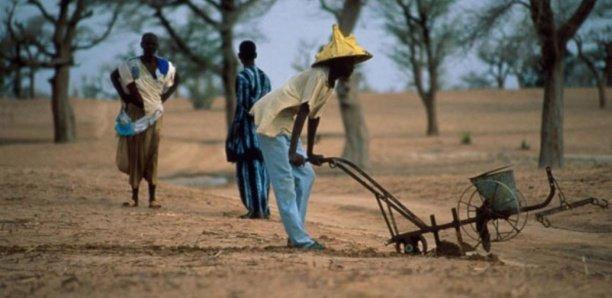Zoom sur l'agriculture (2/2) : Comment le secteur agricole peut vaincre le chômage et doper la croissance