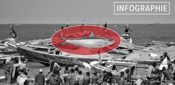 Surpêche en Afrique de l'Ouest : la véritable ampleur du pillage des Européens et des Asiatiques