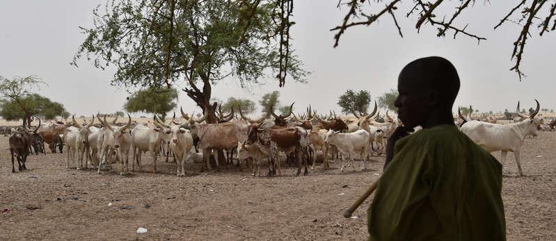 Le Sahel au confluent d'une double crise pastorale et sécuritaire