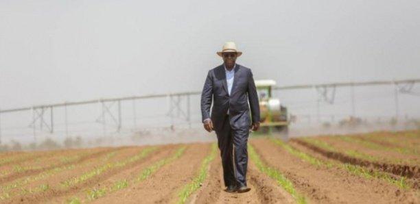 DAC DE KEUR MOMAR SARR : Macky crée «10 000 emplois» et vise une production de 12 000 tonnes par an