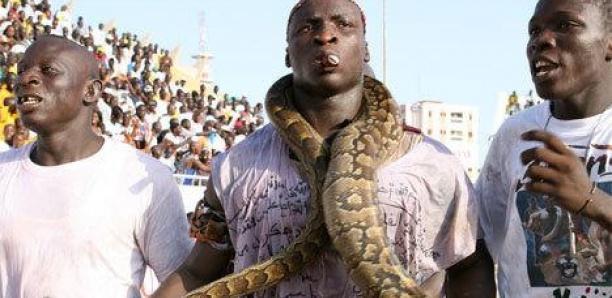 Face Modou Lô : Jules Baldé annonce le retour du serpent d'Ama dans l'arène